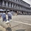 Баклан. Венеция